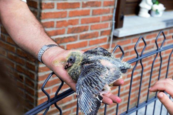 Élevage de pigeons. (Une après midi de balade à Spa)