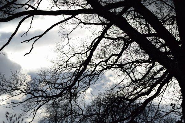 Ciel obscure. Cet après midi pendant la tempête.