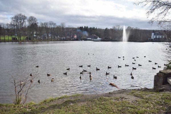 Balade autour du lac (Spa).