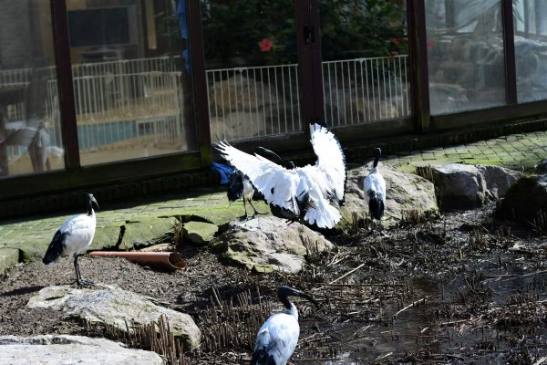 Visite hier au monde sauvage de Aywaille. (14-03-18)