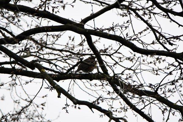 Des oiseaux que j'ai photographié cet après midi.