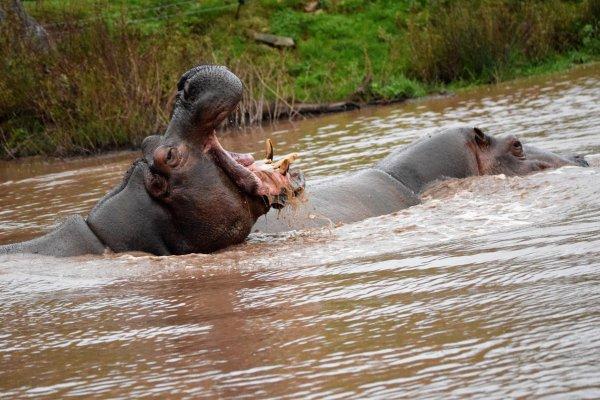 L'hippo en fête...