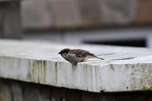 Quelques animaux photographiées cette après midi dans ma rue. (part 2)