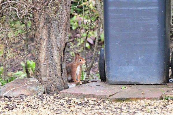 Quelques animaux photographiées cette après midi dans ma rue. (part 3)