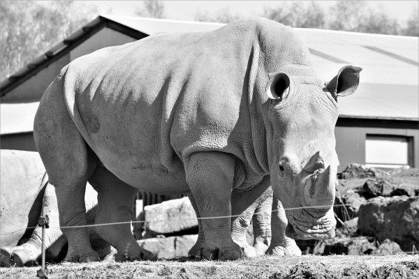 Quelques photo du monde sauvage de Aywaille en noir et blancs, bonne visite.