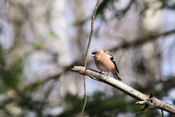 Un oiseaux que j'ai eu la chance de photographié.