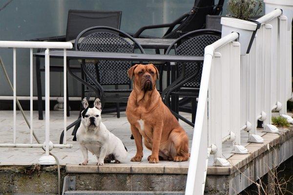 Les chiens de mes voisins en mode on ce fait chier. mdr