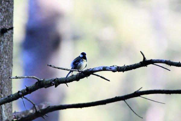 Avec le beau temps les oiseaux son de sortie.