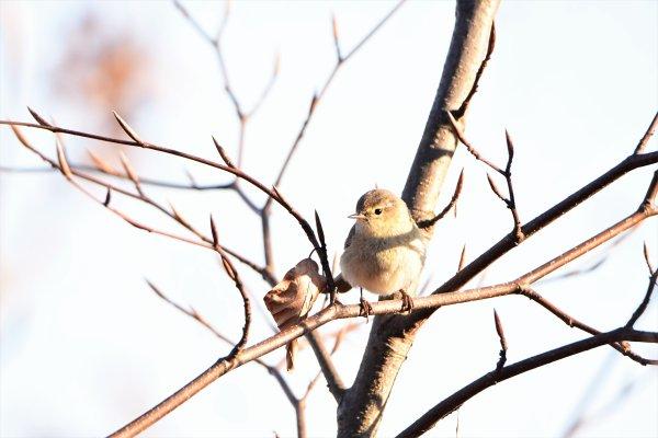 Plusieurs oiseaux.