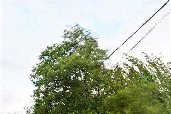 Les arbres en folie.