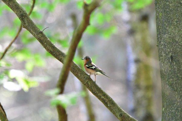 Un oiseau photographié lors d'une promenade.