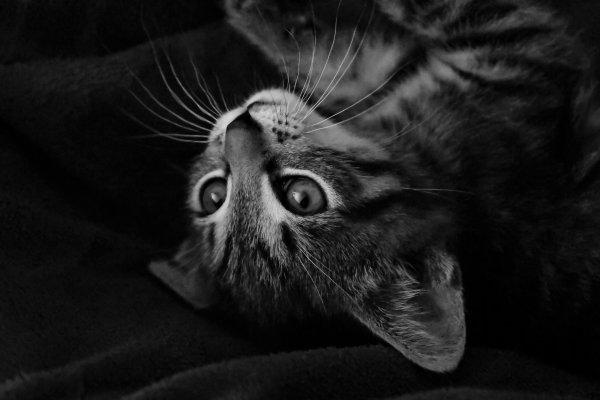 Scéance photo en noir et blancs, avec Junior le chat de ma femme.