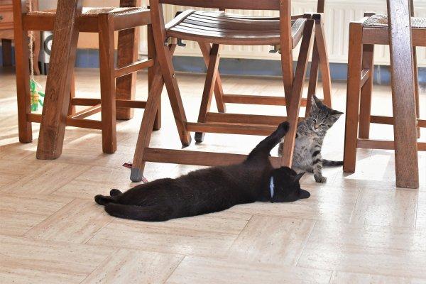 Junior et Bagheera jouent ensemble.