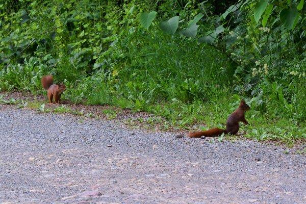 La vie de l'écureuil.
