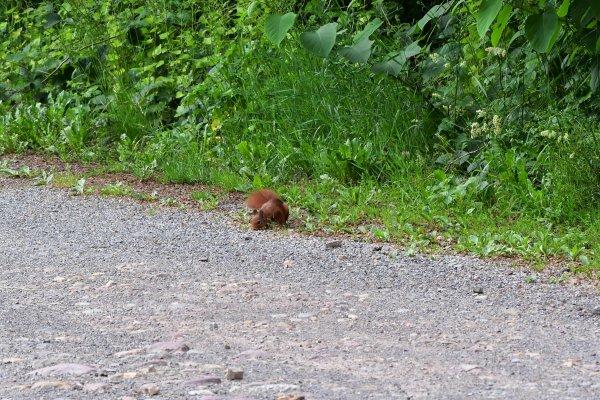 La vie de l'écureuil, suite.