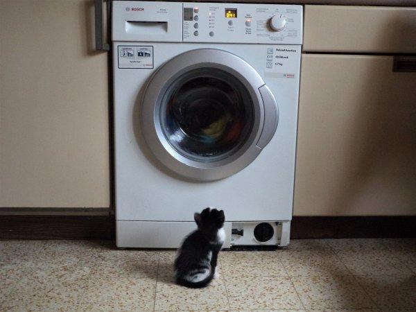 Les chats et la machine à laver.