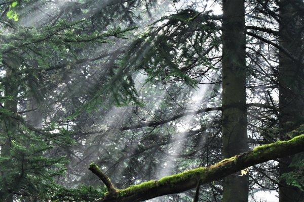 Série de photo sur les jeux de lumières dans les bois.