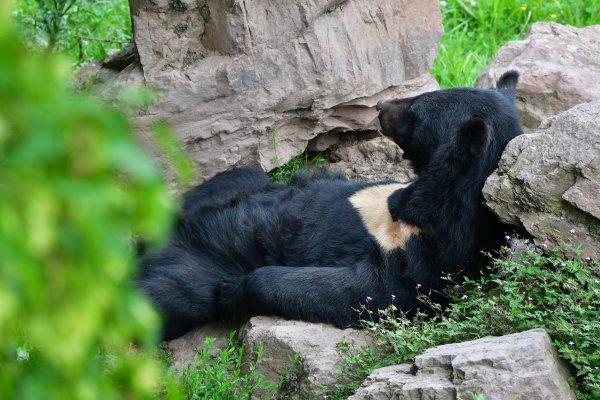 Un ours à collier en mode tranquille. lol