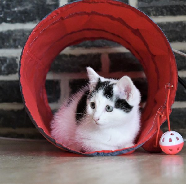 Rose dans son tunnel.
