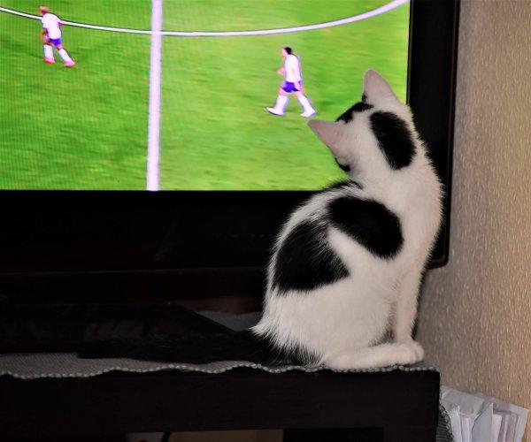 Rose adore la coupe du monde. lol