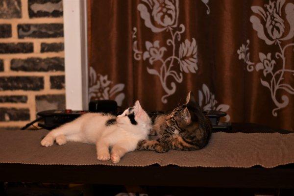 Rose et Junior, ils sont devenus copain ces deux la. lol
