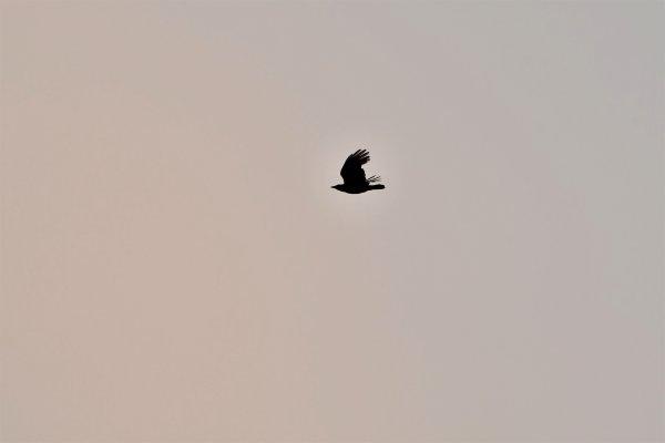 Oiseaux en ombre chinoise.