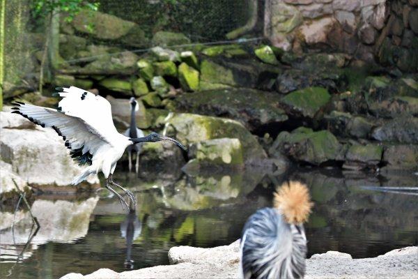Photos d'oiseaux. (Monde sauvade d'Aywaille)