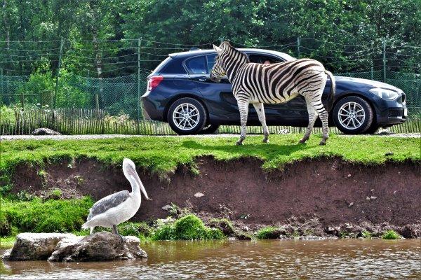 Safari du monde sauvage d'Aywaille.