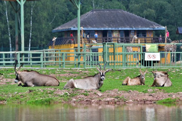 Une famille antilope qui profite du soleil.