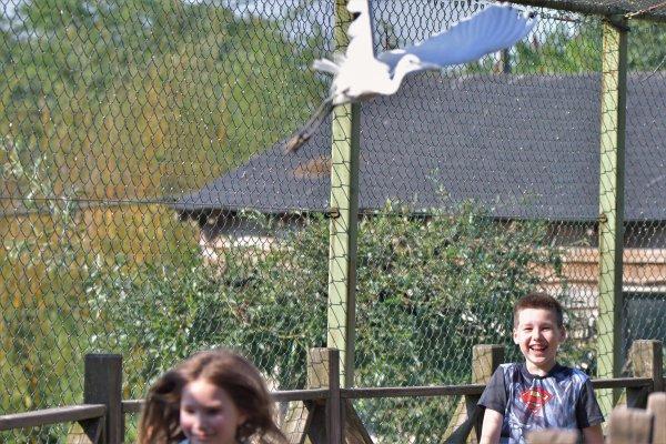Des enfants et un oiseau, suite et fin.