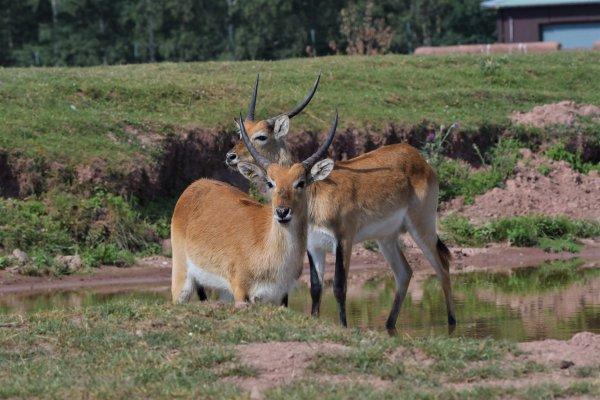 Série de photos du safari du monde sauvage d'Aywaille.