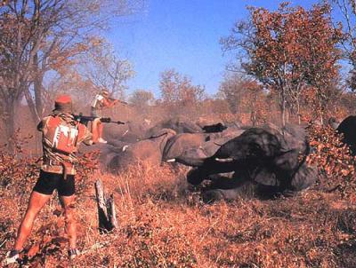 ELEPHANTS EN AFRIQUE DU SUD FEVRIER 2008