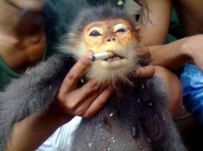 01/08/2012 Vietnam : un soldat torture un singe