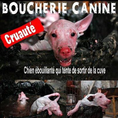 BOUCHERIE CANINE