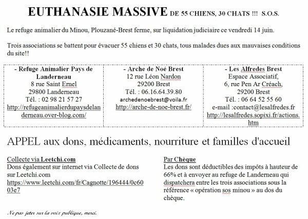 12/06/2013 BESOIN D'AIDE URGENT A BREST POUR SAUVER ANIMAUX