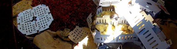 Poussins broyés, étouffés : l'horreur d'un couvoir dévoilée, un employé de couvoir filme et témoigne
