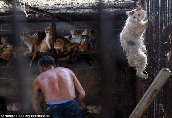 STOP YULIN : mobilisation contre le festival de la viande de chien et de chat 21/06/2015