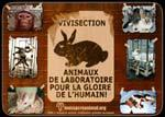 TESTS SUR ANIMAUX EN LABORATOIRE