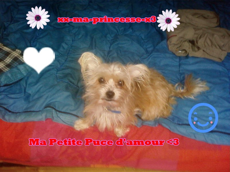 Princesse la plus belle des chiennes<3, Elle Mon N'amoure de chienne <3