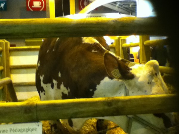 la vache dans le hall du salon