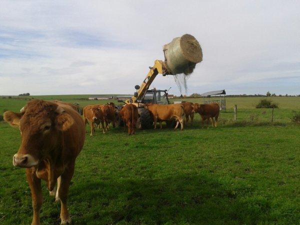 Les vaches sont folles de caterpilar!