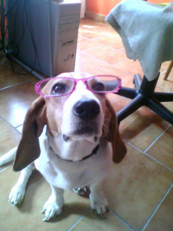 Mon pti chien avec d lunette ^^