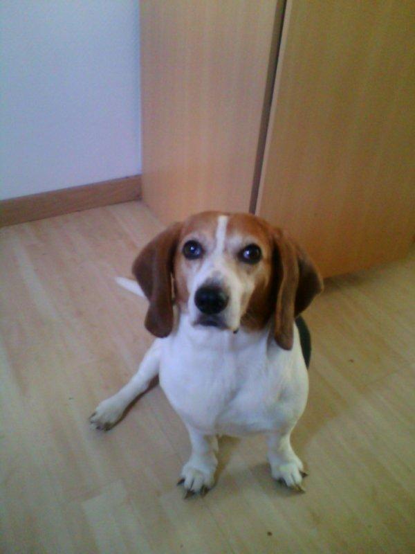 Mon pti chien chien !