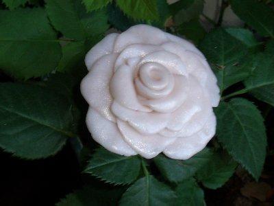 Collier rose de couleur blanche vieilli