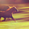 chevaux-trotteurs