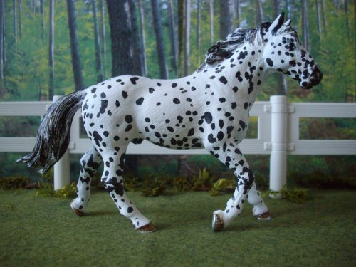 custom appaloosa léopard