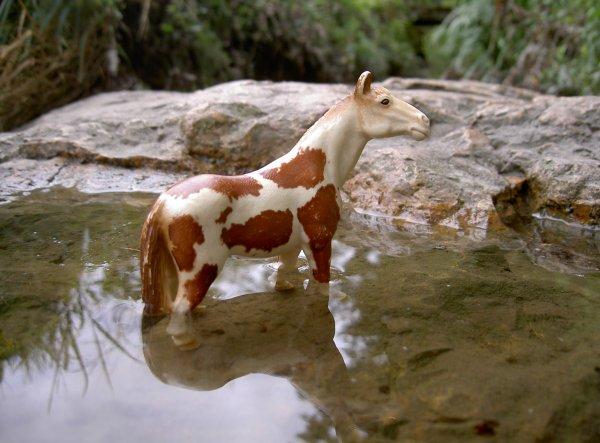 Il était une fois, le cheval ...