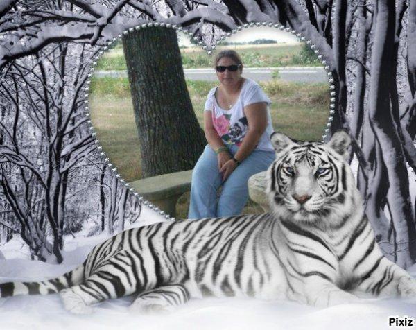 Coeur Tigre Hiver ♥