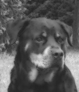 marqueterie  chien