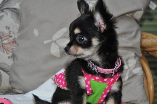 Et petite Shana...petite soeur de Cachou!